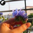 Buy Echium Vulgare Flower Seeds 100pcs Plant Blue Flower Garden Echium
