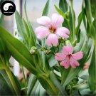 Buy Rosa Pink Prosperity Flower Seeds 100pcs Plant Flower Garden Prosperity