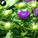 Buy Callistephus Flower Seeds 100pcs Plant Flower Garden Callistephus Chinensis