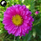 Buy Pink Callistephus Flower Seeds 100pcs Plant Flower Callistephus Chinensis