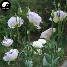 Buy Eustoma Lisianthus Flower Seeds 100pcs Plant Mix Color Flower Lisianthus