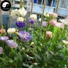 Buy Eustoma Lisianthus Flower Seeds 200pcs Plant Mix Color Flower Lisianthus