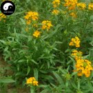 Buy Siberian Wallflower Flower Seeds 200pcs Plant Flower Cheiranthus Cheiri
