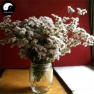 Buy Limonium Bicolor Flower Seeds 60pcs Plant Flower Limonium Bicolor