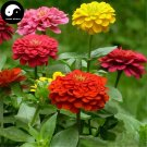 Buy Zinnia Elegans Flower Seeds 120pcs Plant Flower Zinnia Elegans Garden