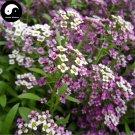 Buy Sweet Alyssum Flower Seeds 200pcs Plant Lobularia Maritima Flower Garden