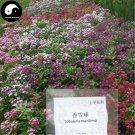 Buy Sweet Alyssum Flower Seeds 400pcs Plant Lobularia Maritima Flower Garden