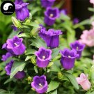 Buy Spotted Bellflower Flower Seeds 100pcs Plant Campanula Punctata Flower
