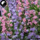Buy Spotted Bellflower Flower Seeds 200pcs Plant Campanula Punctata Flower
