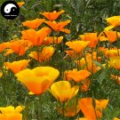 Buy Eschscholtzia Californica Flower Seeds 400pcs Plant California Poppy Flower
