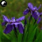 Buy Blue Butterfly Flower Seeds 120pcs Plant Iris Tectorum Flower Garden