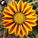 Buy Medal Chrysanthemum Flower Seeds 60pcs Plant Gazania Rigens Flower Garden