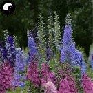 Buy Consolida Ajacis Flower Seeds 100pcs Plant Flower Consolida Ajacis Garden