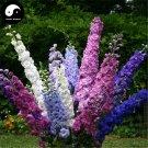 Buy Consolida Ajacis Flower Seeds 400pcs Plant Flower Consolida Ajacis Garden