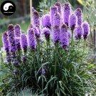 Buy Liatris Spicata Flower Seeds 200pcs Plant Flower Liatris Spicata Garden