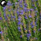 Buy Hyssop Grass Flower Seeds 400pcs Plant Blue Flower Hyssop Garden