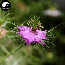 Buy Love-in-a-mist Flower Seeds 80pcs Plant Flower Nigella Damascena Garden