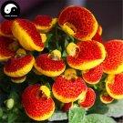 Buy Dicentra Spectabilis Flower Seeds 320pcs Plant Flower Dicentra Spectabilis