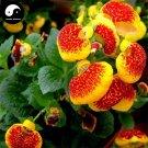 Buy Dicentra Spectabilis Flower Seeds 160pcs Plant Flower Dicentra Spectabilis