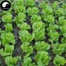 Buy Leaf Lactuca Vegetable Seeds 1200pcs Plant Green Salad Vegetables Lettuce