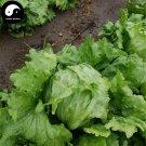Buy Leaf Lactuca Vegetable Seeds 600pcs Plant Green Salad Vegetables Lettuce