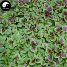 Buy Leaf Amaranth Vegetable Seeds 200pcs Plant Vegetables Amaranthus Tricolor