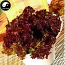 Buy Purple Leaf Lactuca Vegetable Seeds 600pcs Plant Salad Vegetables Lettuce