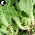 Buy Brassica Juncea Vegetable Seeds 600pcs Plant Leaf Brassica Juncea Jie Cai