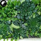 Buy Wu Ta Vegetable Seeds 200pcs Plant Vitamin Leaf Vegetable Wu Ta Cai