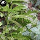 Buy Red Lactuca Sativa Vegetable Seeds 200pcs Plant Leaf Vegetable Lettuce