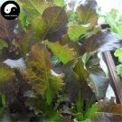 Buy Red Lactuca Sativa Vegetable Seeds 400pcs Plant Leaf Vegetable Lettuce