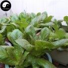 Buy Red Lactuca Sativa Vegetable Seeds 800pcs Plant Leaf Vegetable Lettuce