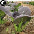 Buy Purple Leaf Brassica Chinensi Vegetable Seeds 800pcs Plant Vegetable Brassica Chinensi