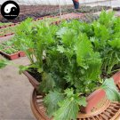 Buy Chuan Qi Mustard Vegetable Seeds 400pcs Plant Vegetable Brassica Juncea