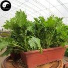 Buy Chuan Qi Mustard Vegetable Seeds 800pcs Plant Vegetable Brassica Juncea