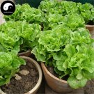 Buy Lettuce Vegetables Seeds 800pcs Plant Green Salad Vegetable Lactuca Sativa