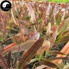 Buy Lettuce Vegetables Seeds 400pcs Plant Red Leaf Salad Vegetable Lactuca Sativa