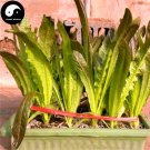 Buy Lettuce Vegetables Seeds 200pcs Plant Red Leaf Salad Vegetable Lactuca Sativa