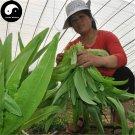 Buy Lettuce Vegetables Seeds 400pcs Plant Green Leaf Salad Vegetable Lactuca Sativa