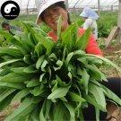 Buy Lettuce Vegetables Seeds 800pcs Plant Green Leaf Salad Vegetable Lactuca Sativa