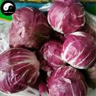 Buy Ball Chicory Vegetables Seeds 600pcs Plant Cichorium Intybus Vegetable