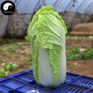 Buy Cabbage Vegetables Seeds 200pcs Plant Chinese Brassica Pekinensis