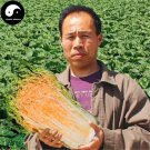 Buy Cabbage Vegetables Seeds 200pcs Plant Chinese Red Heart Brassica Pekinensis