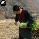 Buy Cabbage Vegetables Seeds 200pcs Plant Chinese Tianjin Brassica Pekinensis
