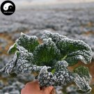 Buy Cabbage Vegetables Seeds 400pcs Plant Chinese Black Leaf Brassica Pekinensis