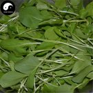 Buy Nanjing Cabbage Vegetables Seeds 800pcs Plant Chinese Green Leaf Brassica Campestris