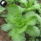 Buy Crown Daisy Vegetables Seeds 400pcs Plant Chinese Green Leaf Vegetable Tong Hao