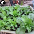 Buy Crown Daisy Vegetables Seeds 800pcs Plant Chinese Green Leaf Vegetable Tong Hao