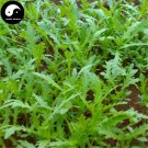 Buy Crown Daisy Vegetables Seeds 800pcs Plant Chinese Green Leaf King Vegetable Tong Hao