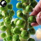 Buy Spore Brassica Oleracea Vegetables Seeds 400pcs Plant Leaf Vegetable Cabbage